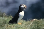 Photo: Puffin Pictures Fish