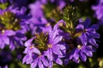 Photo: Purple Flowers Garden Of Innovations Montreal Quebec