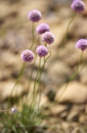 Photo: Purple Wildflowers Picture