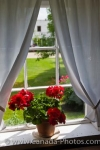 The red potted flowers decorate a windowsill in the historic Hochfield House at the Mennonite Heritage Village in Steinbach, Manitoba in Canada.