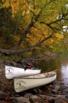 Two rental canoes have come to rest under the Autumn colored trees along the banks of the Oxtongue River in Oxtongue River-Ragged Falls Provincial Park in Ontario, Canada.