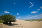 Photo: Sand Dune Growth The Great Sand Hills Saskatchewan