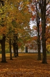 Photo: Scattered Leaves Sharon Temple Ontario