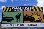 A road sign along the highway warns of the dangers if you do not watch out for sheep in British Columbia, Canada.