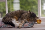Photo: Sleeping Cat picture