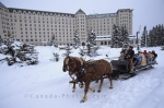 Tourists love to explore Banff National Park in Alberta, Canada on a sleigh ride that is pulled by horses.