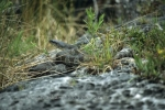 Photo: Snake Ontario Fathom Five National Park