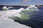 Looking out across the St Anthony Harbour in Newfoundland, Canada, beautiful masses of pack ice float aimlessly about.