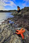 Photo: Tourist Starfish Rocky Shoreline Tofino