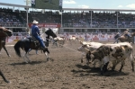 Steer wrestling is one of the main events that take place each year at the Calgary Stampede in Alberta, Canada.
