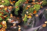 Photo: Stream Fundy National Park Autumn