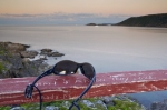 Photo: Sunset Sunglasses Fleur De Lys Coastal Scenery