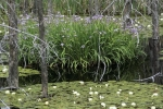 Photo: Swamp Manitoulin Island