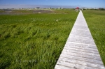 The boardwalk to Flower's Cove in Newfoundland, Canada where the thrombolites decorate the coastal shores, is a beautiful walk surrounded by marshlands and stunning scenery.