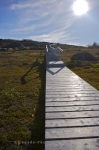 The sun glows down upon the boardwalk and stairs at the beginning of the Tracey Hill Walking Trail in Red Bay, Southern Labrador in Canada.