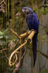Photo: Tropical Forest Parrot Biodome De Montreal Quebec