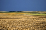 Photo: Wheat Country Saskatchewan