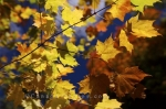Photo: Whiskey Rapids Trail Autumn Leaves Algonquin Provincial Park