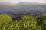 Photo: Wildflowers Jacks Pond Gros Morne National Park
