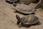Photo: Wood Turtles Habitat Biodome De Montreal Quebec