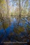 Photo: Woodland Trail Swamp Reflections Point Pelee National Park Ontario