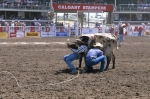 Steer wrestling is a major event at the Calgary Stampede in Alberta, Canada which brings in many visitors.
