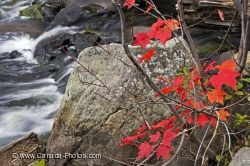 Autumn Colored Leaves Oxtongue River Ontario Canada