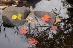 Autumn Leaves Pond Reflections Ontario Canada