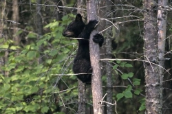 Animal Picture Bear Cub
