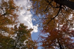 Beautiful Autumn Trees Algonquin Provincial Park