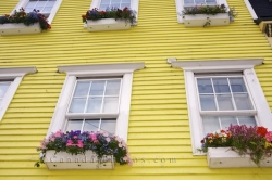 Blossoming Window Potted Plants St Johns Houses Newfoundland