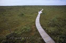 Boardwalk Kouchibouguac National Park