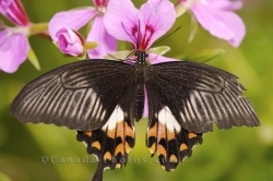 Butterfly Flower Garden Picture