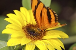 Colorful Butterfly Flower Picture