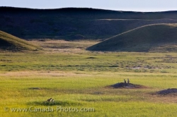 Dog Town Grasslands National Park West Block Saskatchewan
