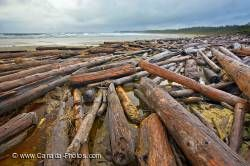 Driftwood Scenic Nature Beach Pacific Rim National Park
