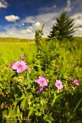 Elkwater Lake Wildflowers Alberta Canada