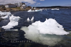 Floating Pack Ice St Anthony Harbour Newfoundland