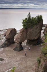 Flowerpot Hopewell Rocks Bay Of Fundy