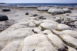 Flowers Cove thrombolites Landscape Newfoundland