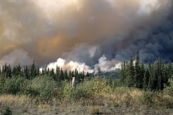 Forest Fire Yukon Territory
