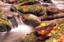 Fundy National Park Stream
