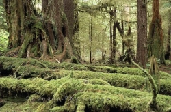 Graham Island Rainforest British Columbia