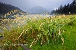 Grass fringed Lightning Lake Manning Provincial Park British Columbia Canada