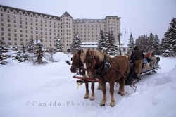Horse Buggy Rides Lake Louise