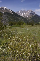 Mountain Meadows Blakiston Valley Alberta
