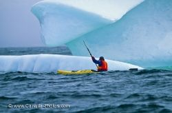 Newfoundland Iceberg Kayaking Atlantic Ocean
