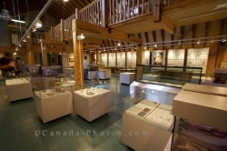 Exhibits Newfoundland Insectarium Butterfly Pavilion