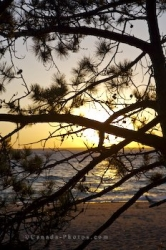 Pine Tree Sunset Lake Superior Ontario