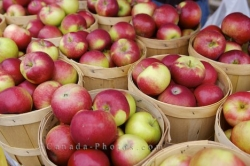 Red Apples Picture